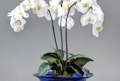Orchids in a glass bowl, Realisitic and Beautiful - Home Décor by Ruth Dyer - in the Villages of Florida.
